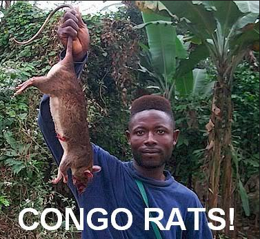 Congo Rats.PNG